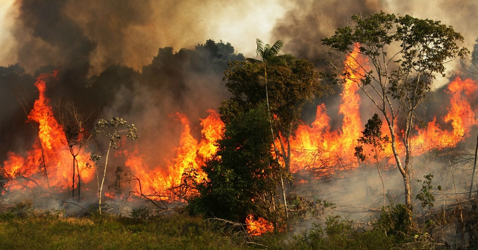 amazon incendiu brazilia amazonia